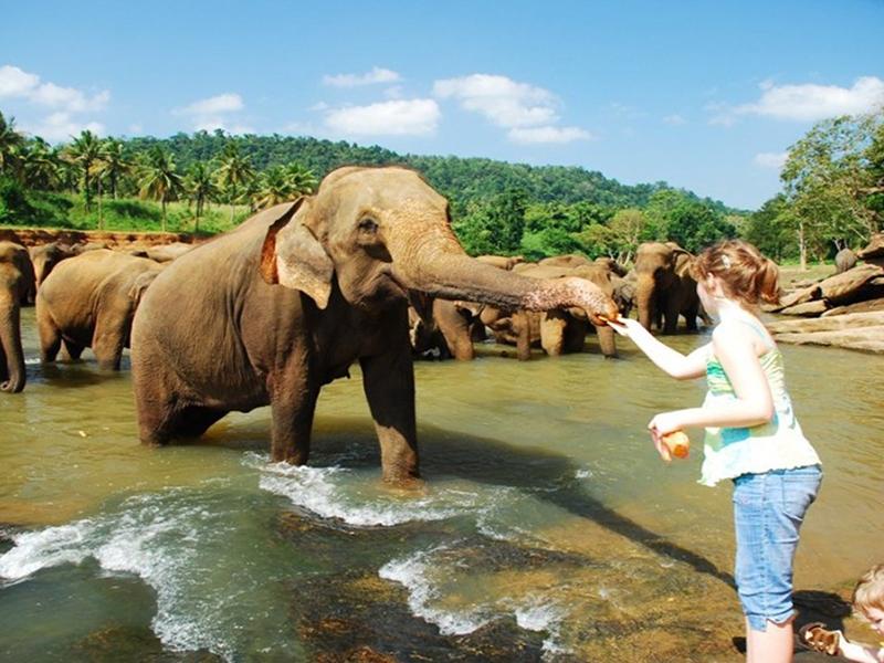 Day 02 - Negombo to Pinnawala
