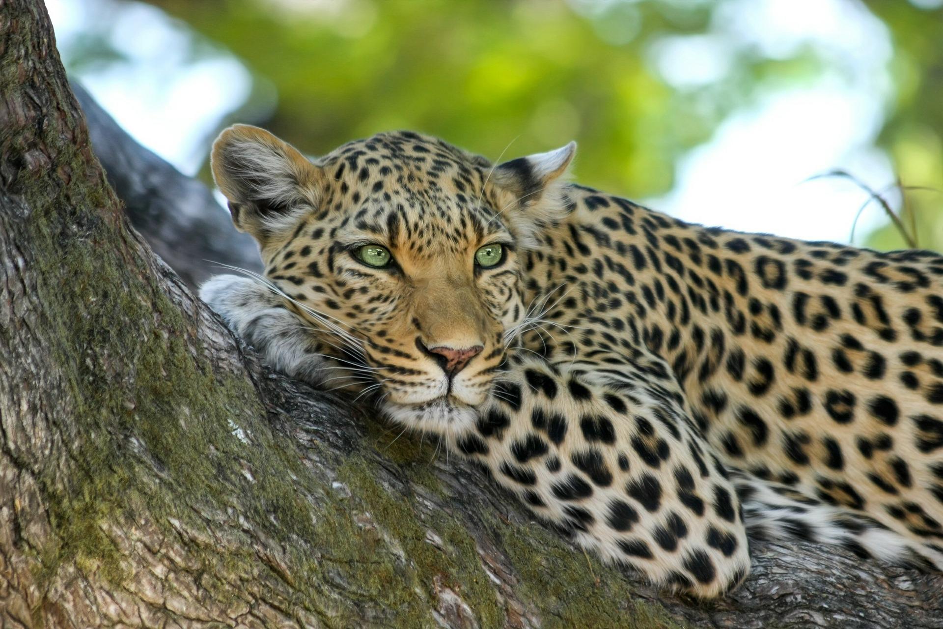 Day 09 - Yala National Park