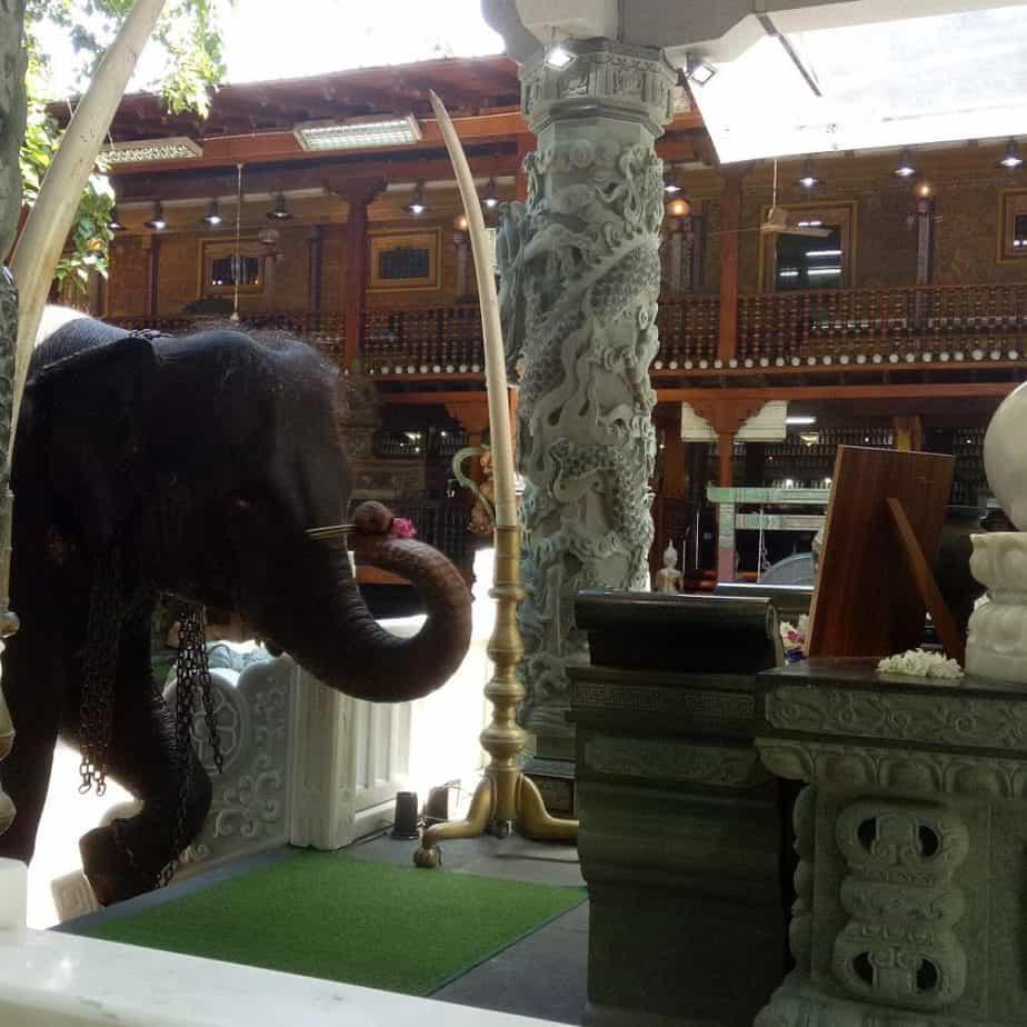 Elephant in Gangaramaya Temple