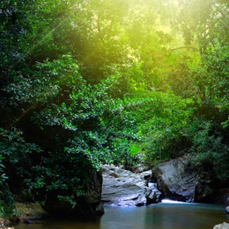 SinharajaRainForest 2