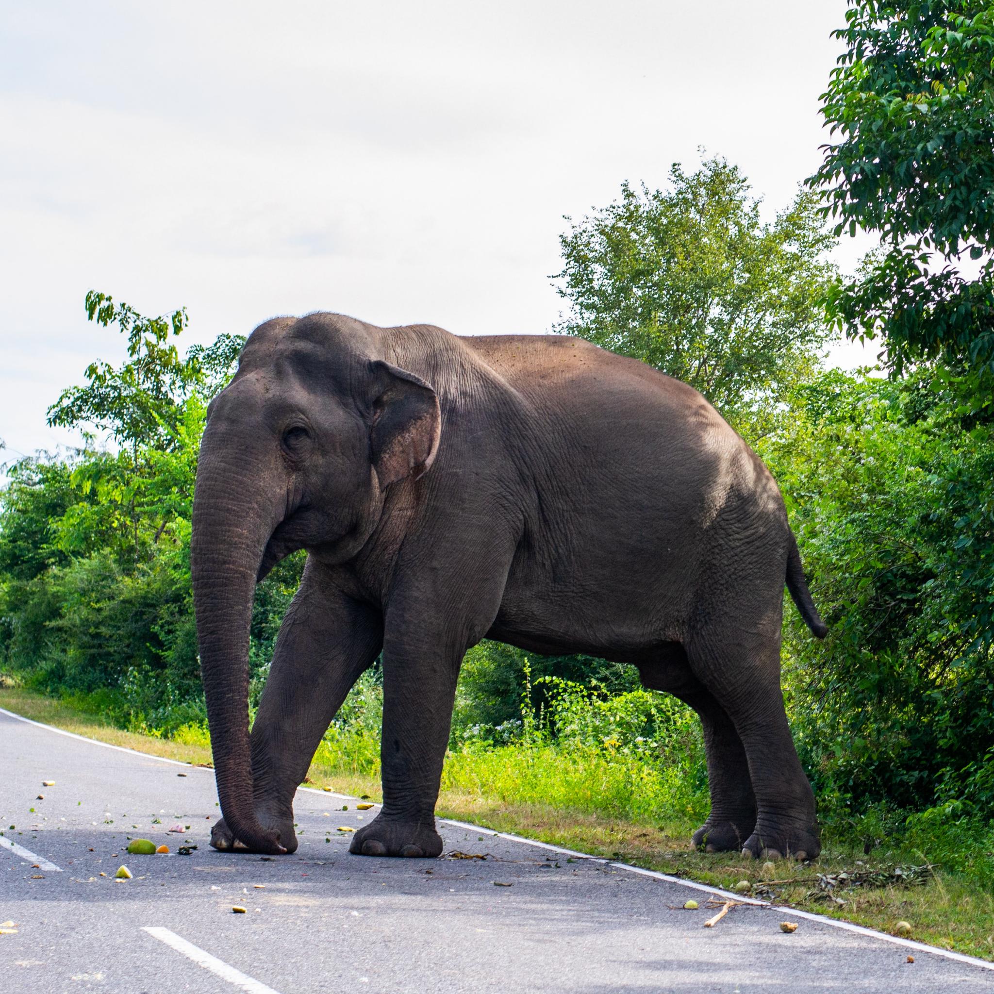 Day 02 - Visit Sigiriya
